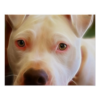 Pitbull Puppy Dog Eyes Art Photography Poster