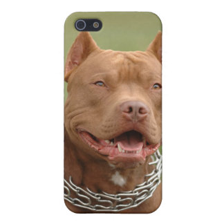 Pitbull Puppy Dog iPhone 4 Case Cover