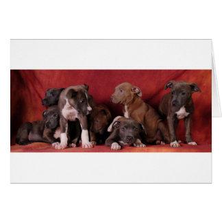 Pitbull puppy heaven greeting card