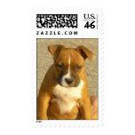 Pitbull puppy postage