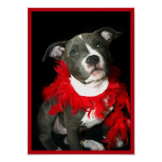 Pitbull puppy poster
