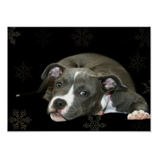 Pitbull puppy poster