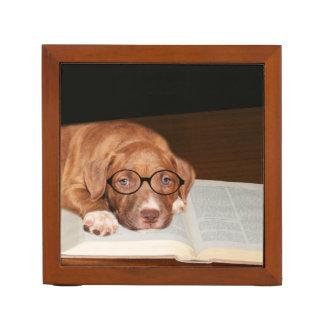 Pitbull puppy reads Pencil/Pen holder