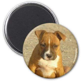 Pitbull puppy round magnet