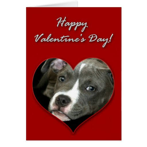 Pitbull puppy Valentines Day Card