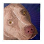 Pitbull rojo de la nariz con un fondo azul azulejo