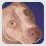 Pitbull rojo de la nariz con un fondo azul pegatina cuadrada