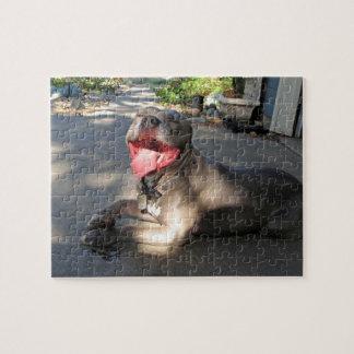 Pitbull Sloppy Dog Kiss Puzzle