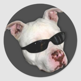 Pitbull stickers