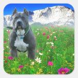Pitbull Terrier americano azul, pico de los lucios Calcomanías Cuadradases