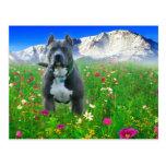 Pitbull Terrier americano azul, pico de los lucios Tarjetas Postales