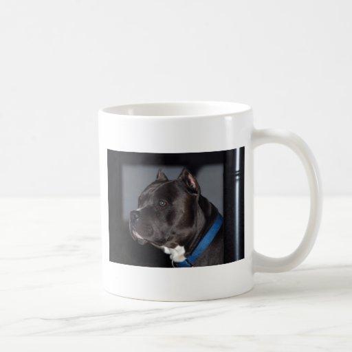 Pitbull Terrier americano Taza Básica Blanca