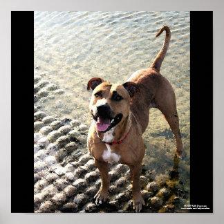 Pitbull Terrier Impresiones