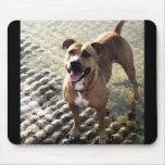 Pitbull Terrier Tapetes De Ratones