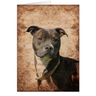 Pitbull Terrier Tarjeta De Felicitación