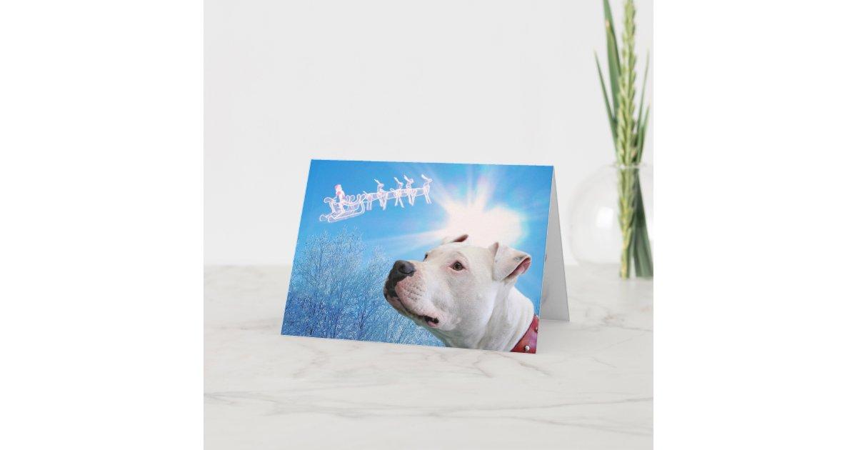 Pitbull White Dog Christmas Wish Holiday Card | Zazzle.com