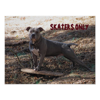 Pitbull with Skateboard Skaters Only Poster