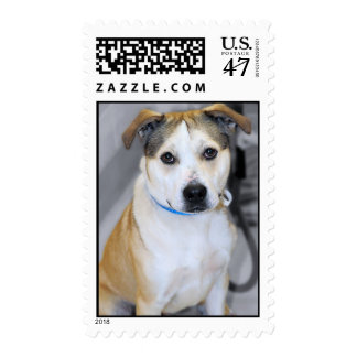 Pitbull/Yellow Lab Mix Dog Breed Postage Stamps