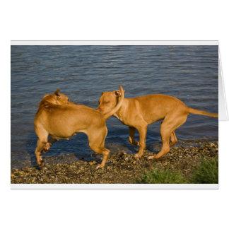 pitbulls in love greeting card