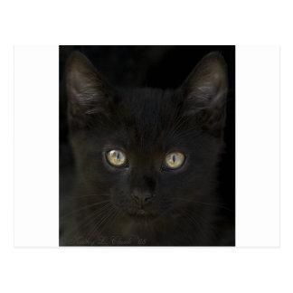 Pitch Black Feral Kitten With Shiny Loving Eyes Postcard