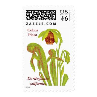 Pitcher Plant Carnivorous Plant Postage Stamp
