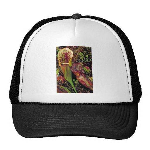 Pitcher plant mesh hats