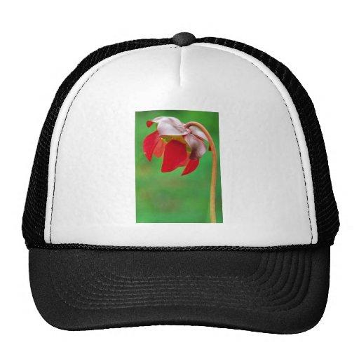 Pitcher plant hats
