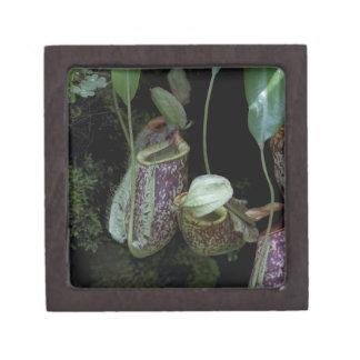 Pitcher plant in National Orchid Garden Premium Keepsake Box