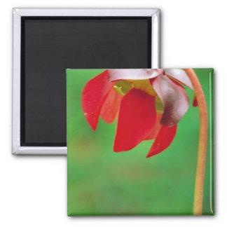 Pitcher plant fridge magnet