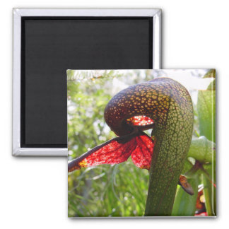 Pitcher plant magnet