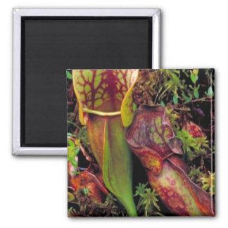 Pitcher plant magnets