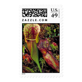 Pitcher plant postage stamps