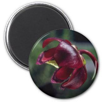 Pitcher-Plant (Sarracenia Purpurea) flowers Fridge Magnets