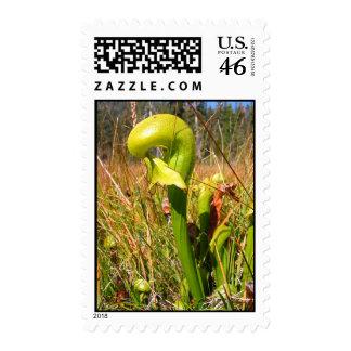 Pitcher Plant stamp