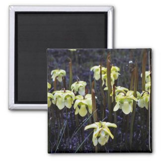 Pitcher Plants 2 Inch Square Magnet