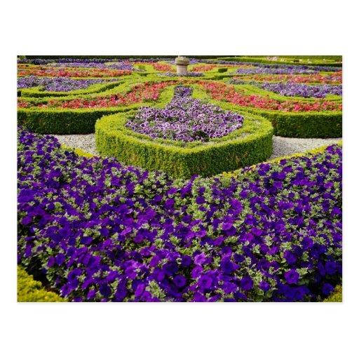 Pitmeeden gardens, Scotland flowers Post Card