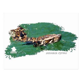 Pitón 01 de los marismas tarjetas postales