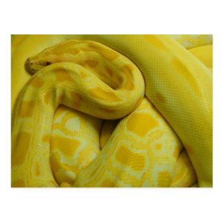 Pitón birmano amarillo impresionante postal