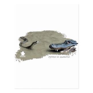 Pitón contra el cocodrilo 01 tarjeta postal