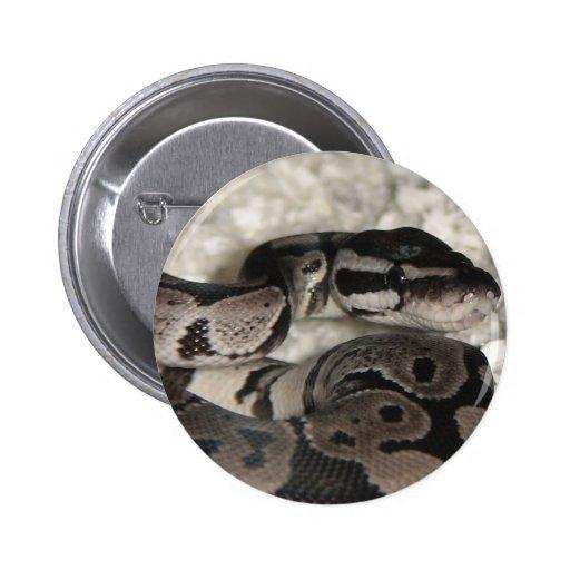 Pitón de la bola de VPI Axanthic Pin