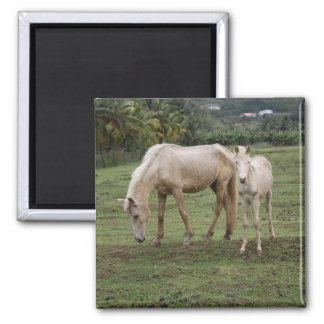 Pitons2 2 Inch Square Magnet