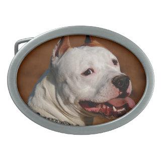 Pittbull Terrier Hebillas De Cinturón Ovales