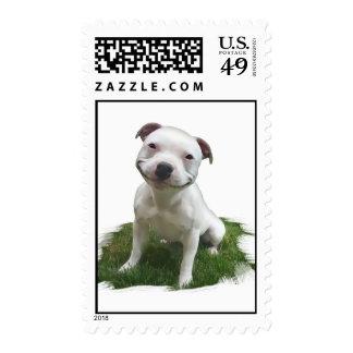 Pittie sonriente timbre postal