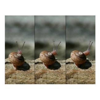 Pitts n'Tenney Snail Postcard