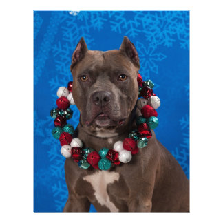 Pitty Christmas Letterhead