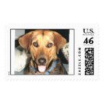 Pix del sello del jengibre