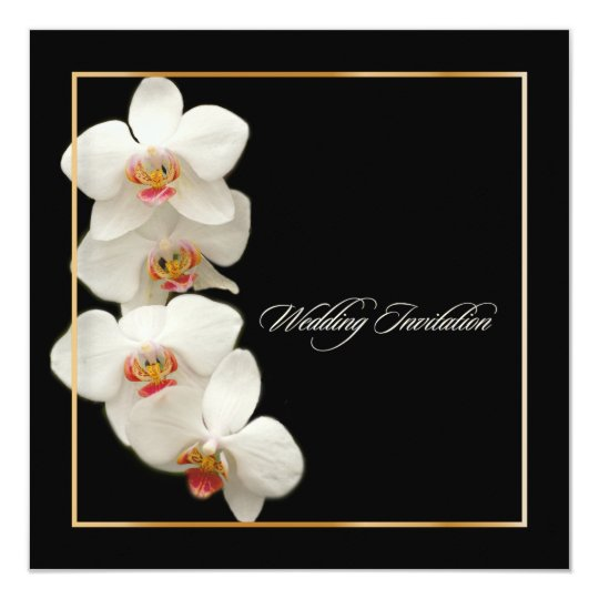 PixDezines orchids/phalaenopsis Card