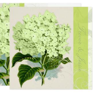 PixDezines vintage green hydrangea Card