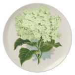 PixDezines vintage hydrangea, green Dinner Plate