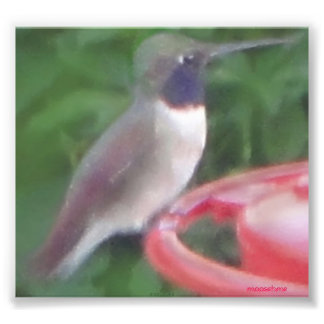 Pixel humming bird photo photo print